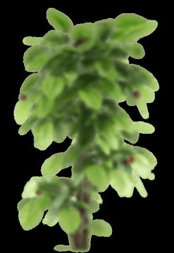 Plant en fond du slider - Liseuse numérique